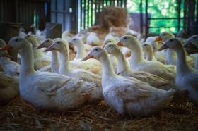 Sladesdown Farm