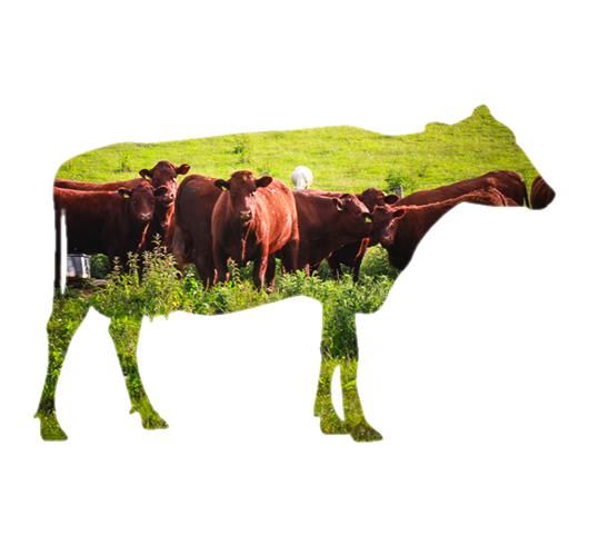 Sladesdown Farm - Beef