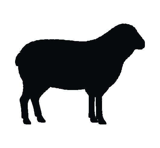 Sladesdown Farm - Lamb